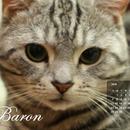 aninko&baron 圖像