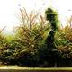 創作者 aquaforest 的頭像