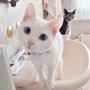 貓兒玫瑰園 B&B