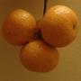 後山無籽砂糖橘