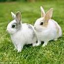 兔兔 圖像