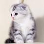 cat1976