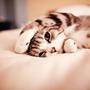cat950210