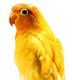 創作者 金鳥 ( 星辰 ) 的頭像