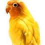 金鳥 ( 星辰 )