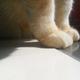 創作者 大貓紋小姐 的頭像