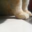 大貓紋小姐