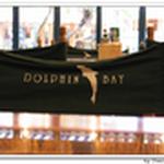 dolphin213