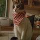 創作者 壽司貓 的頭像