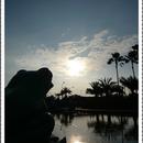 RainFox 圖像