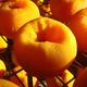 創作者 公館柿餅 的頭像