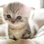 kitty980165