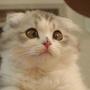 meow6042359