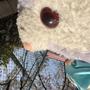 nanakishoujyo