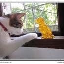柚子貓 圖像
