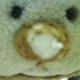 創作者 shizuku 的頭像