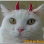 showbuu