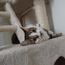 sillycat91010