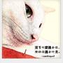 smokingcat菸草貓
