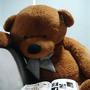 泰迪熊&泰迪貓
