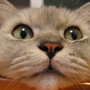離不開電暖器的貓