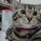 創作者 流浪貓 的頭像